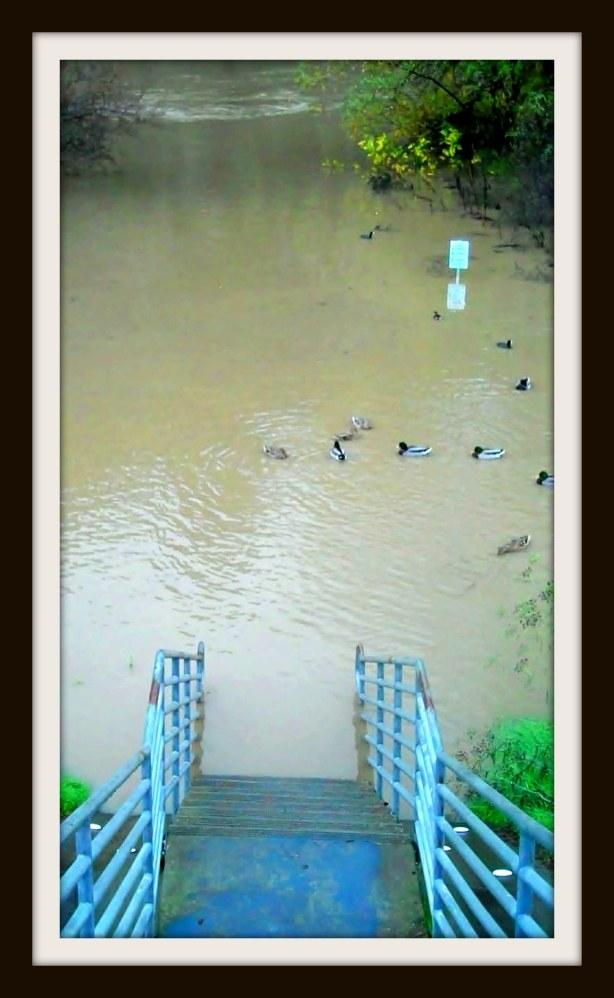 Stairway  To Duck Heaven