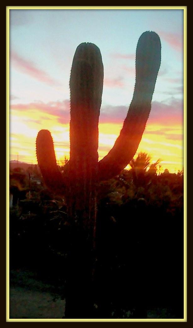 Cactus salutes the break of day.