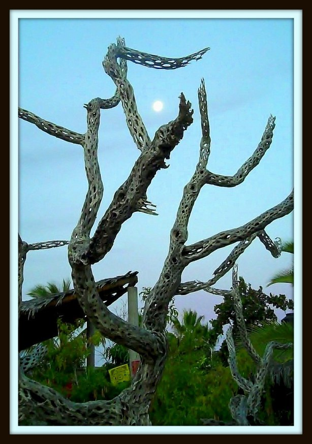 Dead tree wi