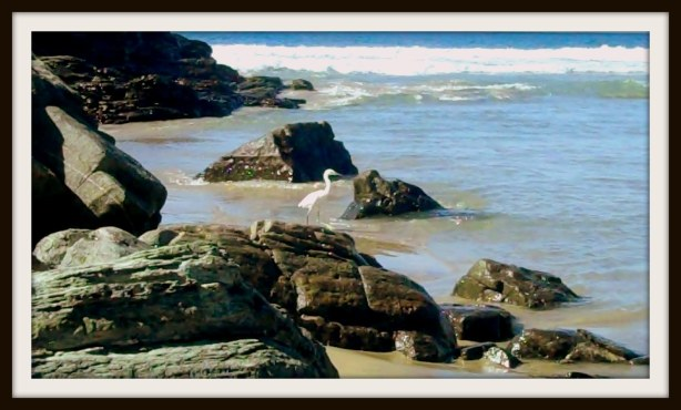 Egret on the rocks please.
